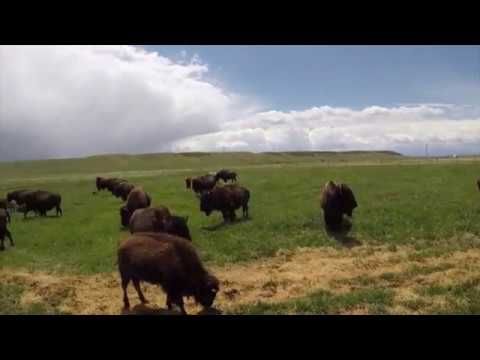 Wyoming, Bison and Drone Flight