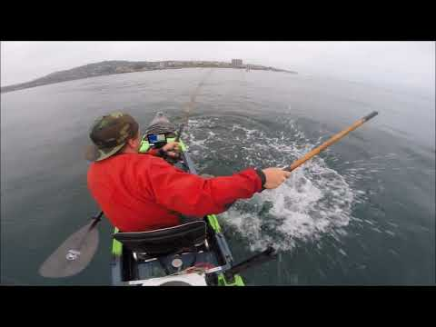 Squiddily Yellows: Kayak Fishing For Yellowtail In La Jolla