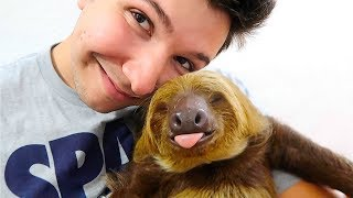 INTRODUCING MY PET BABY SLOTH Yes Shes Real