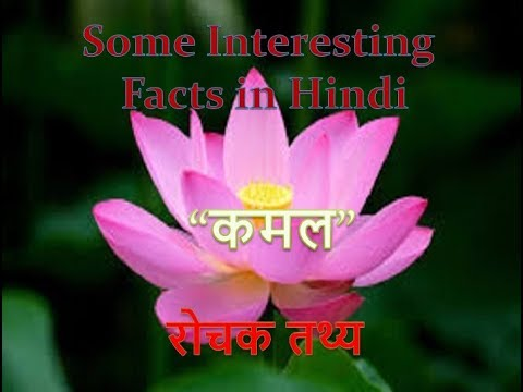 18 18 18 18 interesting facts about lotus flower in hindi mightylinksfo