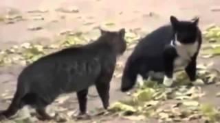 Классные приколы с котами  Супер смешные коты  Видео приколы про котов  Улетные животные