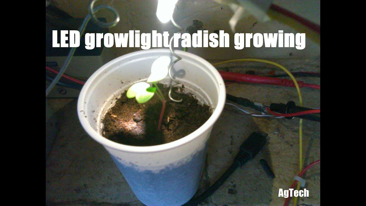 Easy Way To Grow Radishes Indoors Using Led Light