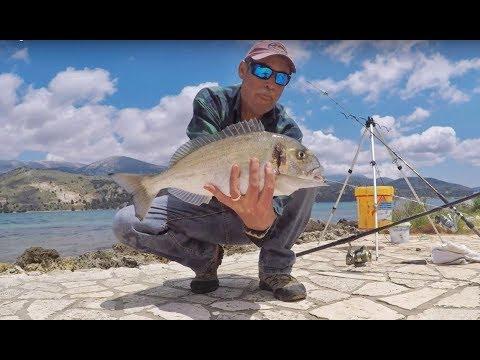 Fishing Porgy 'Tsipoura' Fishing Greece