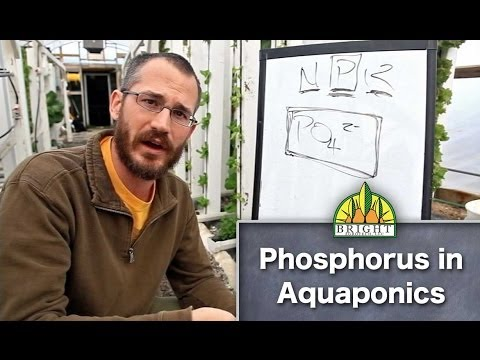 Aquaponic Plant Nutrients: Phosphorus