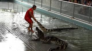 Паттайя Таиланд Крокодиловая ФЕРМА Смертельное Шоу Животные