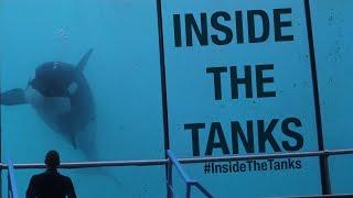 Inside The Tanks (Full Documentary) thumbnail