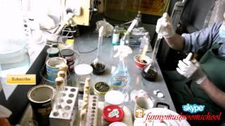 УНИКАЛЬНОЕ ВИДЕО! Посев клеточной культуры мицелия вешенки на жыдкую среду(В этом видео