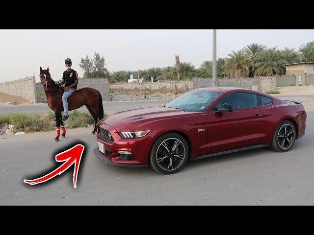 خليت حصان يسحب سيارتي الموستنج تتوقعون يقدر !!