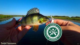 Что за рыба вышла на яму РЫБАЛКА НА ЩУКУ 2021