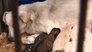 Репортаж из приюта для животных на ул Искры