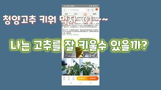 청양고추 키워 먹자 01. 수경재배, 녹소토란?, 타오…