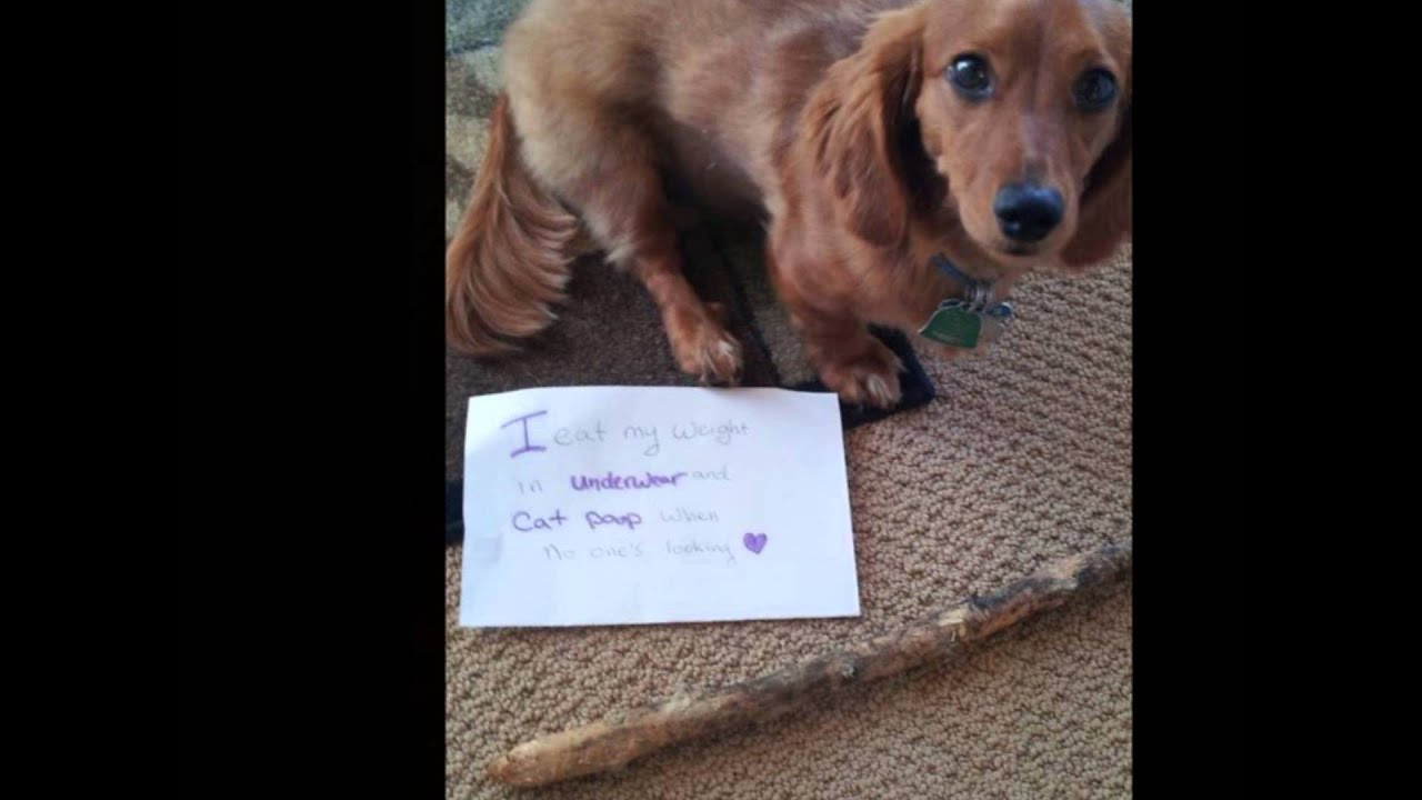 dog shaming compilation lol   youtube