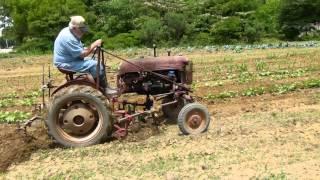 Cultivating a field on a 1950's Farmall Cub