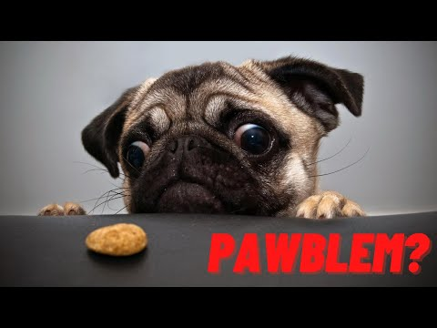 Funny Animals - Cute Funny Pets - Dogs And Cats Video 2020 - Try Not To Laugh