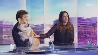 L'interview d'Anouchka Delon & Julien Dereims