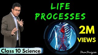 Life Processes: What is the Importance of nutrition? : Class 10 Science Biology