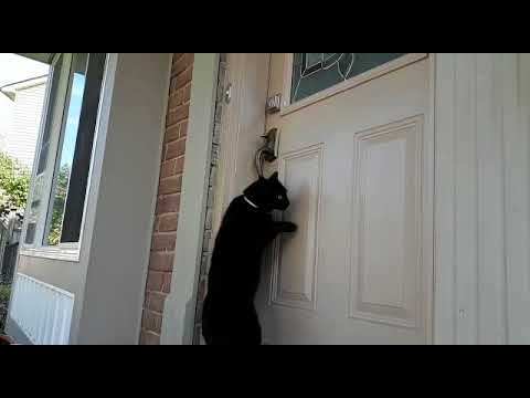 Cat knocking on the door