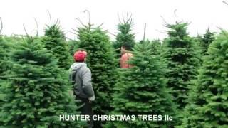 HUNTER CHRISTMAS TREES