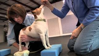 Physical Therapy of the Four-Legged Variety