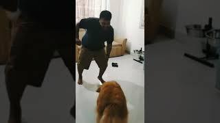 Chogada Tara | Loveyatri | Dance by Prashant Jain and Rescued Dog Laila
