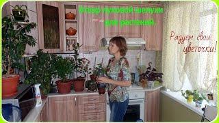 Как приготовить отвар луковой шелухи для комнатных растений.