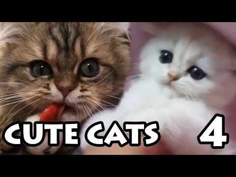 Cute Cat Videos Ep. 4 | Try Not to Cuddle Compilation 2019