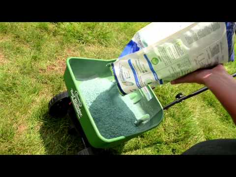 How to Overseed Your Lawn  - Ace Hardware