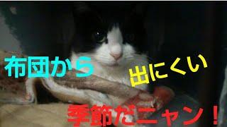 2019.1.22 朝の保護猫達