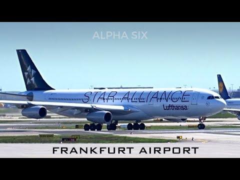 [STAR ALLIANCE] Lufthansa Airbus A340-313  D-AIGY  Takeoff @ Frankfurt Airport