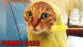 FUNNY & CUTE CATS 😱😁 Funny Animals 😂 Try Not To Laugh or Grin 😍 - 140