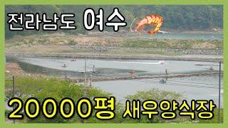 20000만평!!! 여수 양식장 & 새우치어근황…