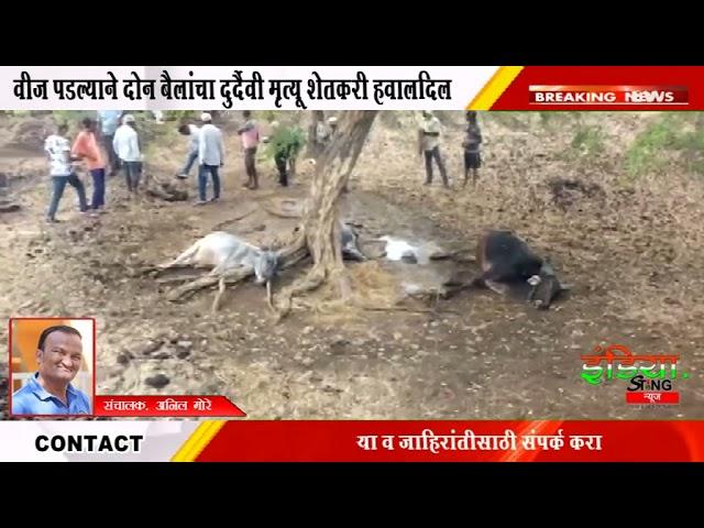 नवापूर : वीज पडल्याने दोन बैलांचा दुर्दैवी मृत्यू शेतकरी हवालदिल