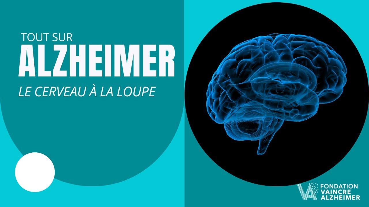 Download Mécanismes et secrets de la maladie d'Alzheimer : le cerveau à la loupe
