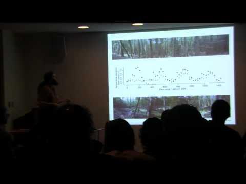 Foundation tree species loss - Harvard Forest