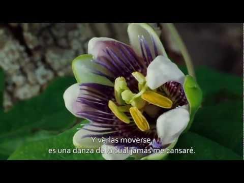 TEDxSF - Gratitud (subtitulado) [HD]