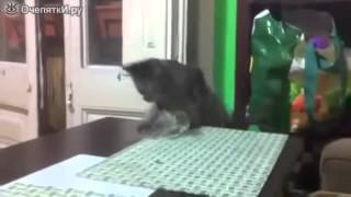 Прикол! Кот против стакана с водой