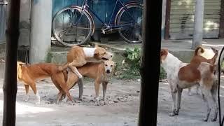 Download Video Awesome Dogs Hot Meetings কুকুরের সুপার হিট সেক্স ভিডিও না দেখলে মিস।। MP3 3GP MP4