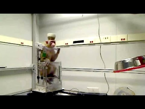Monkey Controls A Wheelchair With Its Brain