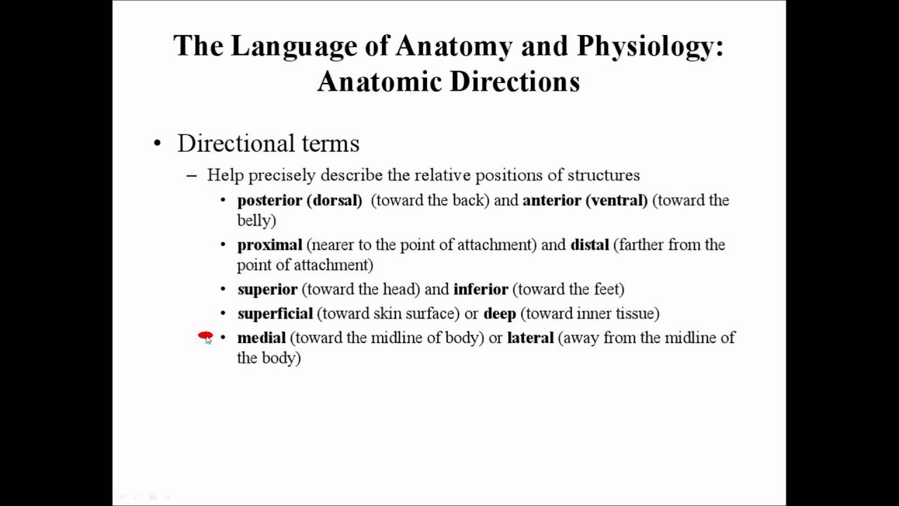 Directional Terms Of The Body By Prof Knoppy Youtube