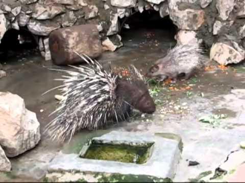 Tít đi chơi vườn bách thú