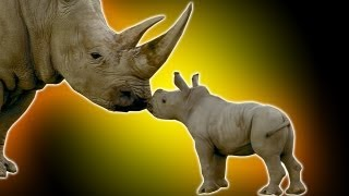 Cute Baby Rhino - Earth Unplugged thumbnail