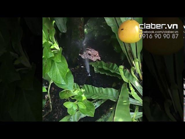 Tưới phun mưa cho cây Bưởi - Béc Claber 90474