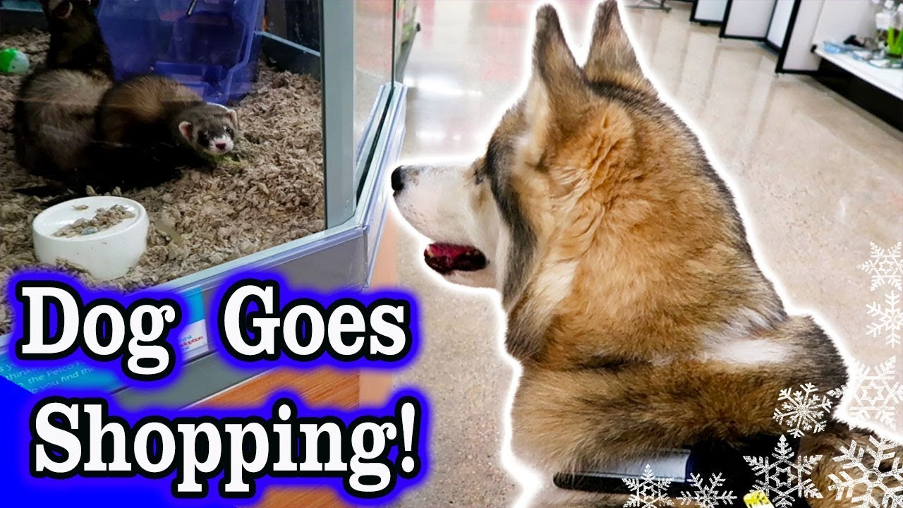 Dog Goes Shopping At Petco