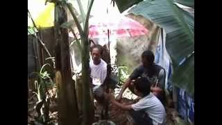 UNIX: Pisang Berbuah Aneh di Sungai Tarung, Padang | Eni Gustiani