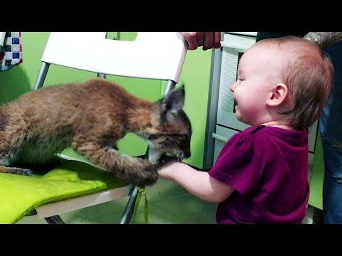 Kittens and Babies Playing Together Compilation 2018