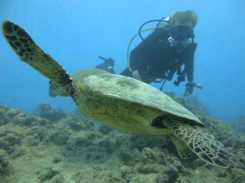Dive Hawaii, Honolulu Diving Tours