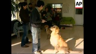 Focus On Growing Trend Of Keeping Dogs As Pets