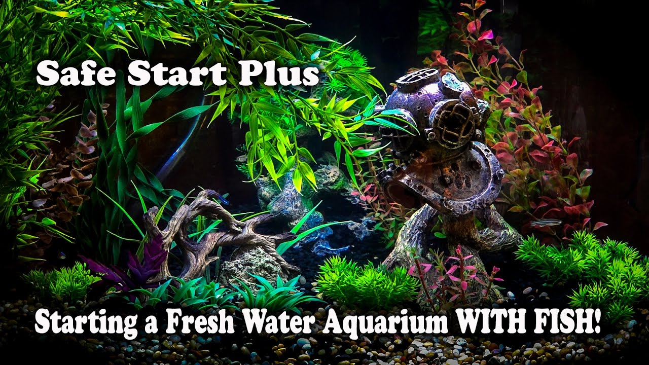 How to setup a freshwater fish tank with fish in it for How to setup a freshwater fish tank