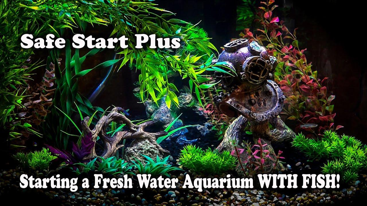 Freshwater aquarium fish capacity - How To Setup A Freshwater Fish Tank With Fish In It Safestart No Waiting