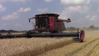 Three Case IH 9230 Axial-Flow Combines on Tracks Harvesting Wheat